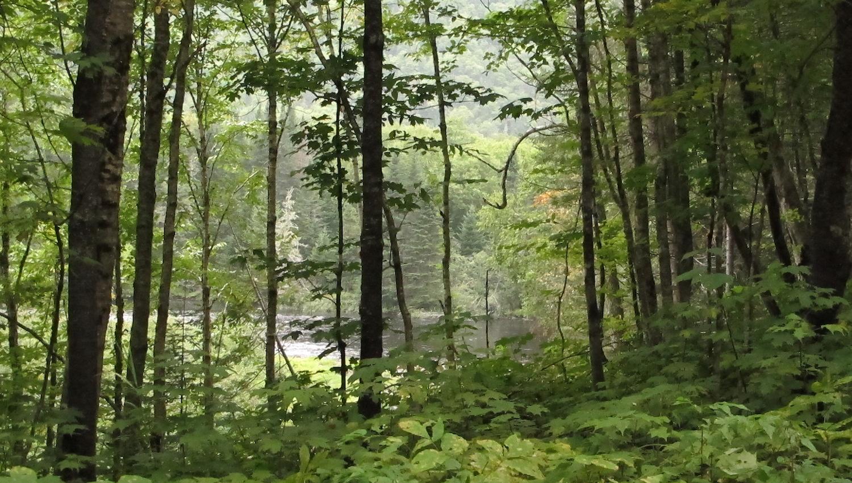 Paisajes en el Parque Nacional Jacques Cartier Canada