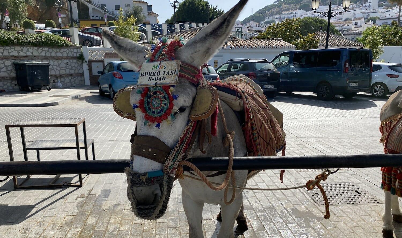 Imagen-tipico-burro-taxi-Mijas