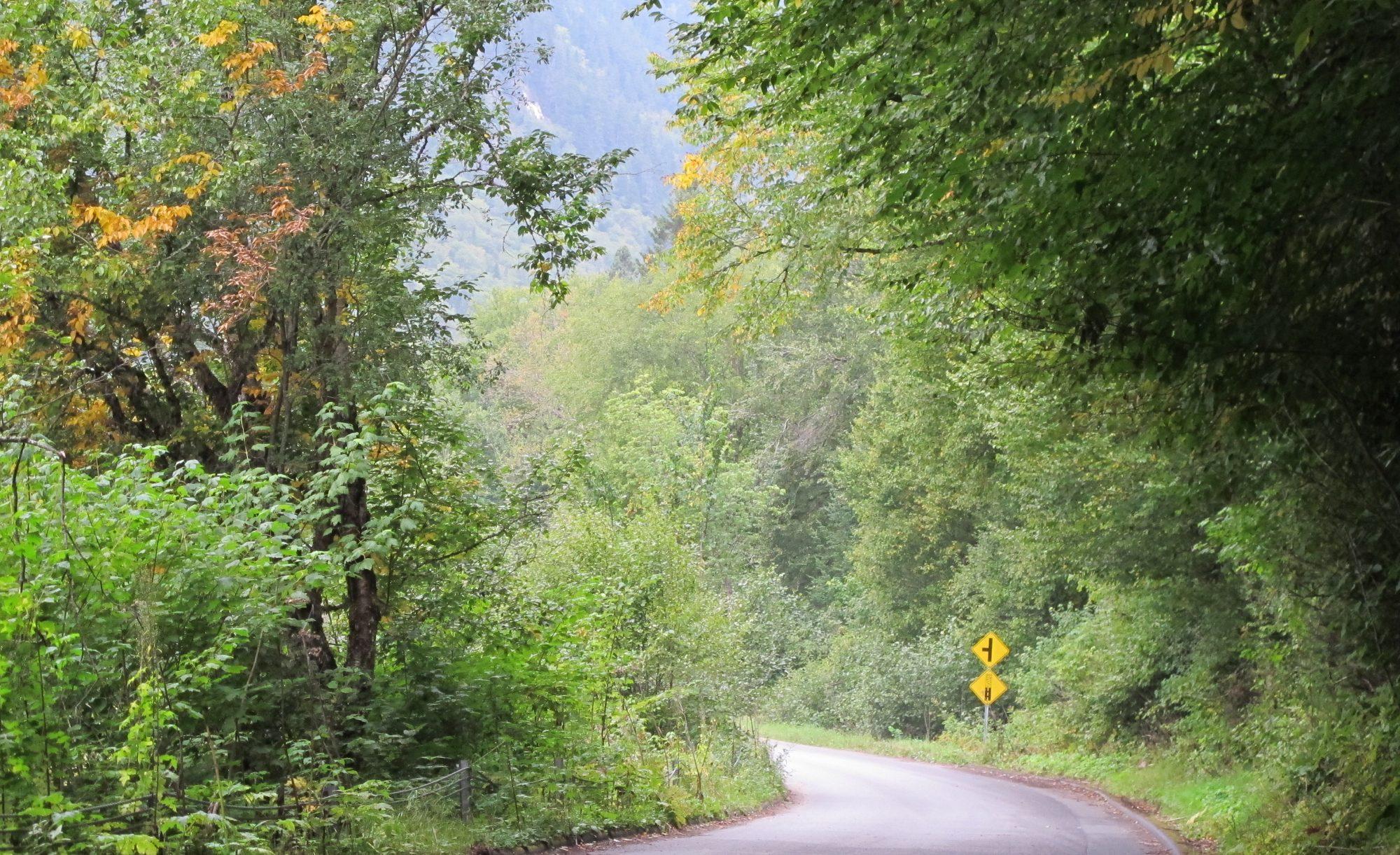 Carretera entre arboles y naturaleza en Canada