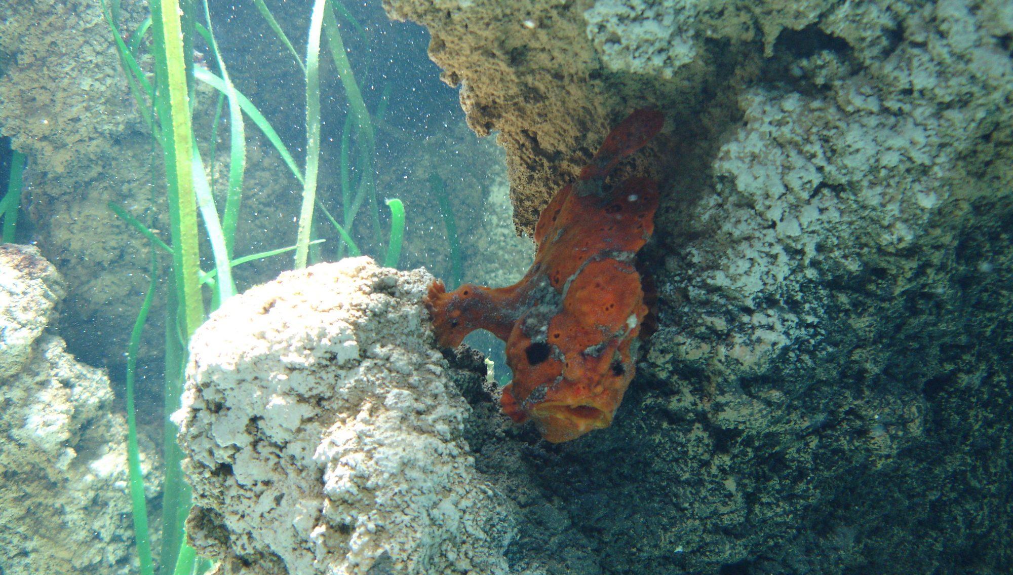 Pez en el acuario de Gijon